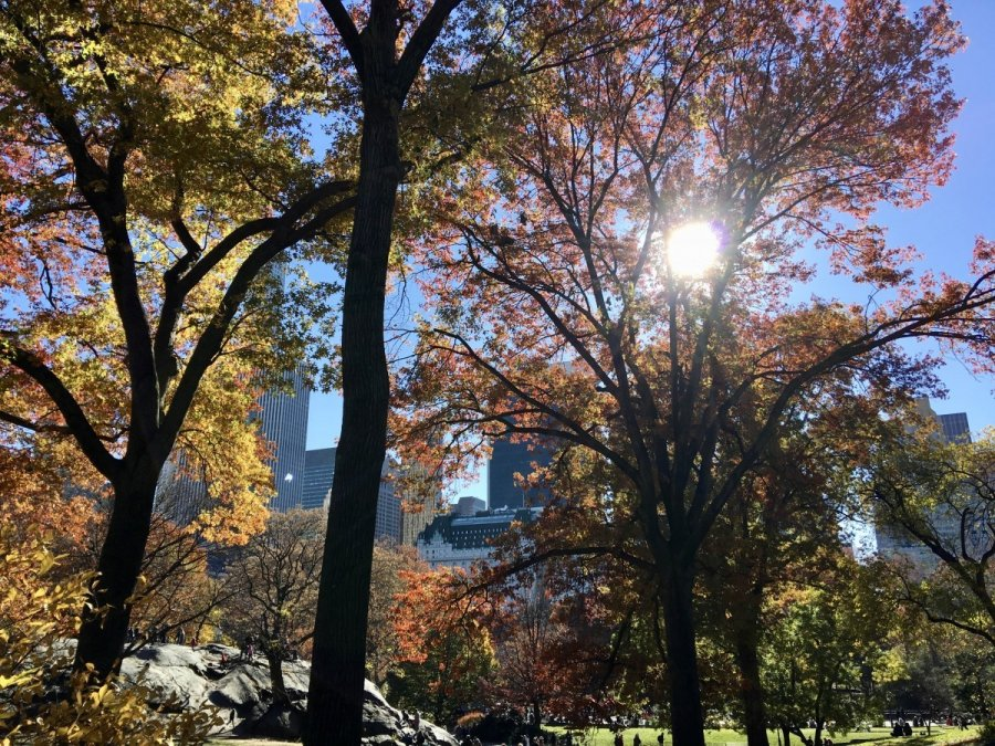 nyc fall autumn