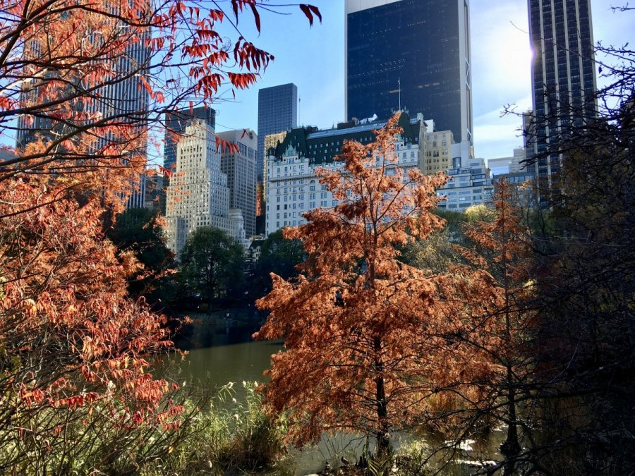 nyc fall autumn plaza