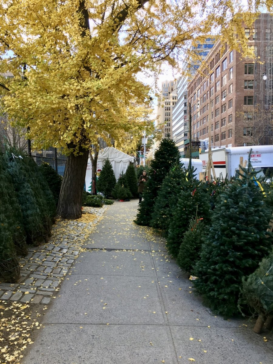 nyc fall autumn xmas trees